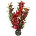 Superfish Easy plants middel 20 cm NR.6