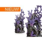 biOrb Purple Reef