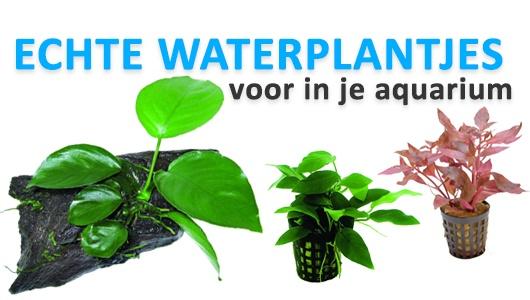 Nieuw! Aquarium planten, direct uit voorraad leverbaar!