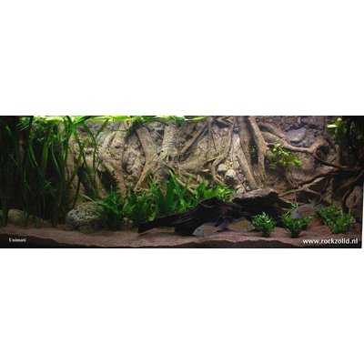 Rockzolid Background Tropical Forest Tree 198x58cm