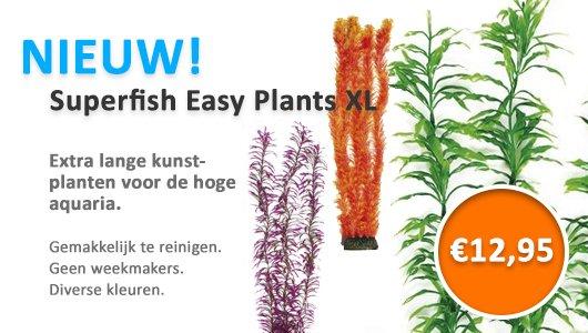 XL Plants 60 cm!