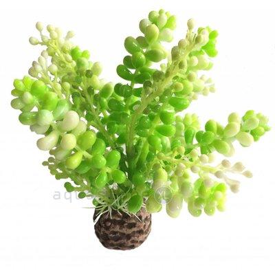 biOrb Green caulerpa