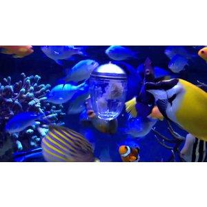 Superfish Grazing pod feeder
