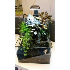 Waterplant Plantybox