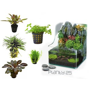 Waterplant Plantybox
