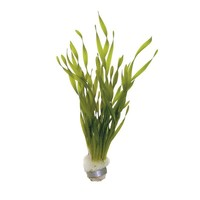 Waterplant Vallisneria Torta bos