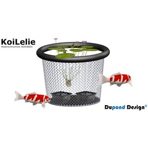 AquastoreXL Koi lelie medium