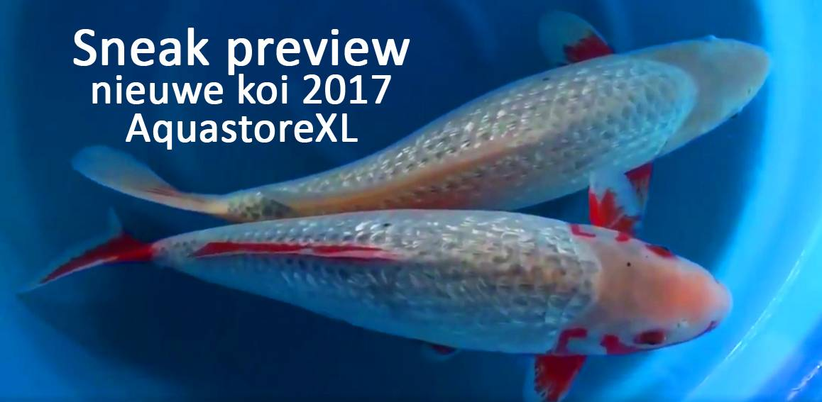 Sneak preview diverse nieuwe koi 2017