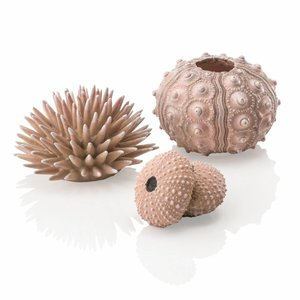 biOrb Zee-egel decoratieset urchin naturel