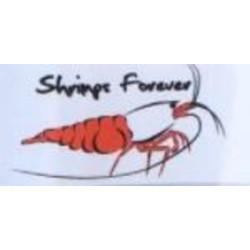 Shrimps Forever