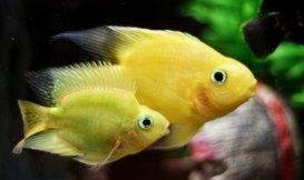 Aquarium kopen? Lees hier alles wat u moet weten!