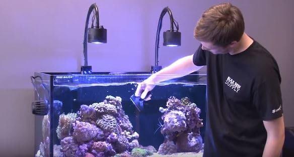 Hoe onderhoud ik mijn aquarium? De beste tips!