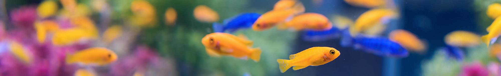 AquastoreXL De totaal leverancier van Vijver & Aquarium banner 1