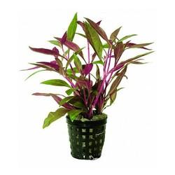 Planten in Pot