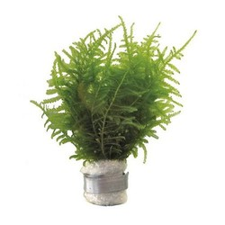 Planten Divers