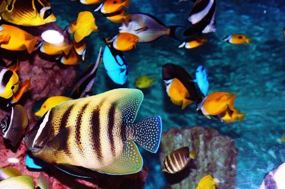Het water van uw aquarium testen doet u zo!