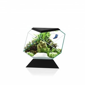 Ciano Nexus Pure Betta Life 5C - Zwart