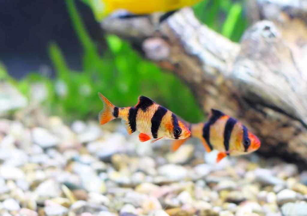 Top 5 feitjes over zoetwatervissen