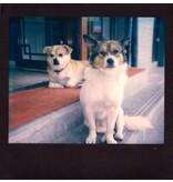 Цветная кассета Polaroid Image Spectra с черной рамкой