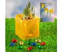 Paasgeschenken! Ostern Geschenke LENTEBLOEIER kaufen?