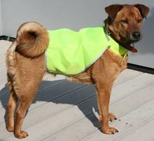 ♣ Dog Safety Jacket (veiligheid jasje voor honden)