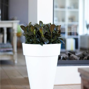 Elho Pure Round High Flowerpot. Give your garden, patio or home a beautiful look!