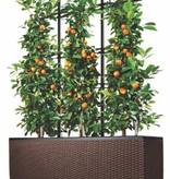 Lechuza Trio Cottage Flowerpot - Comprend Lechuza Irrigation