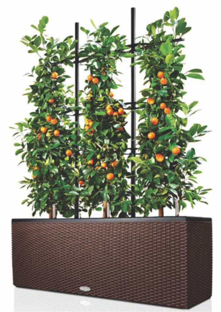 Lechuza grille de montée Trio - permettent de plantes grimpantes et ...