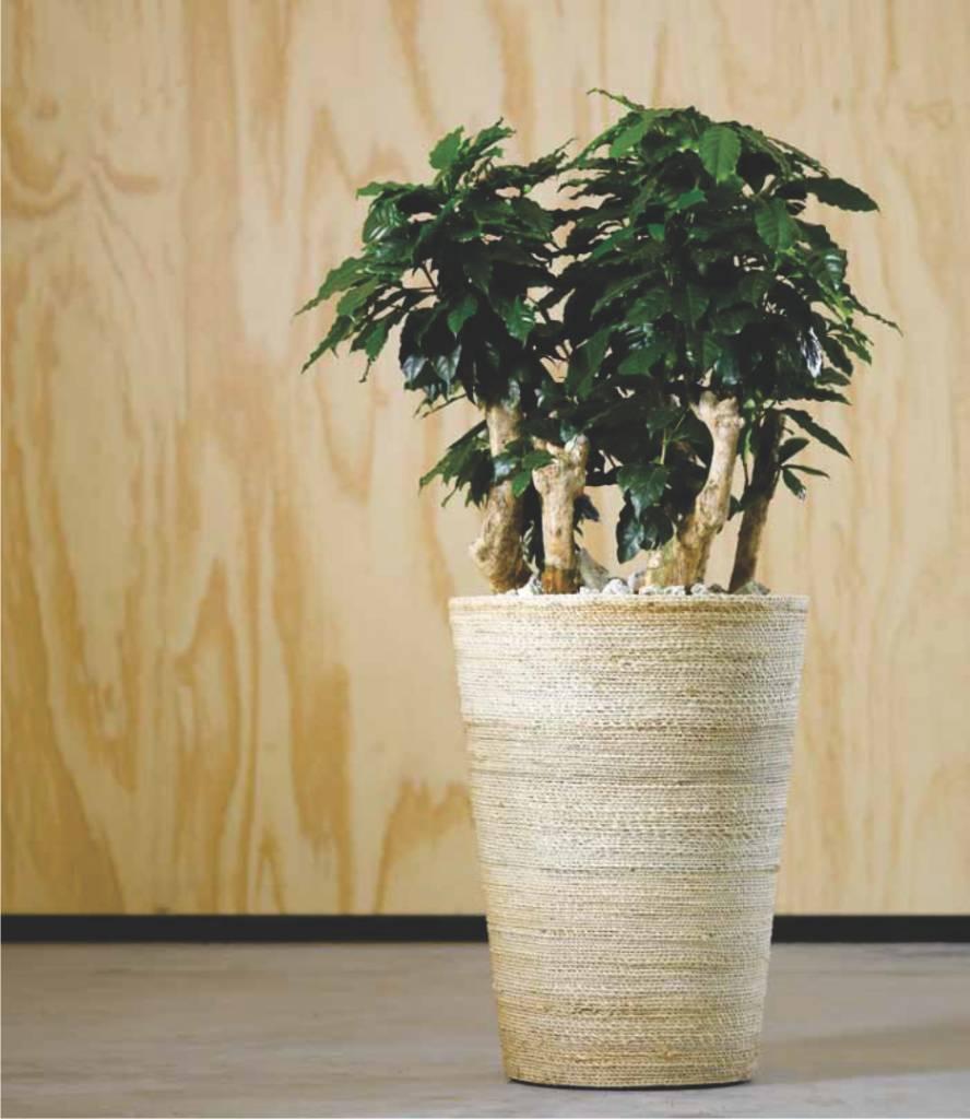 pots de fleurs tous les types et tailles diff rentes. Black Bedroom Furniture Sets. Home Design Ideas