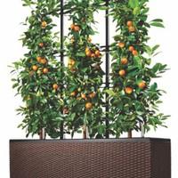 Pots de fleurs sur le balcon ou la terrasse dans tous les types et tailles