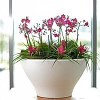 Polyéthyléne Pots de fleurs ou jardinières trouver ici sur designPOTshop.be