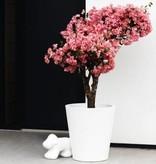 Elho Pure Straight Round - Un pot de fleur élégant et moderne avec de belles promotions!