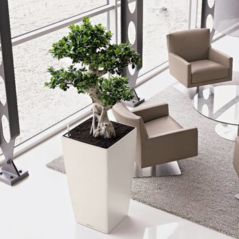 Lechuza Cubico Flowerpot - Simplicity and style in multiple colors and sizes