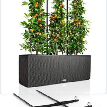 Lechuza Trio climb grid - let climbing plants and flowers climbing beautiful!