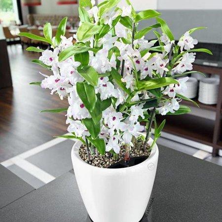 Lechuza Classico LS Flowerpot - Timeless avec un look classique