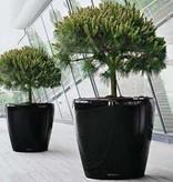 Lechuza Classico Flowerpot - Timeless avec un look classique
