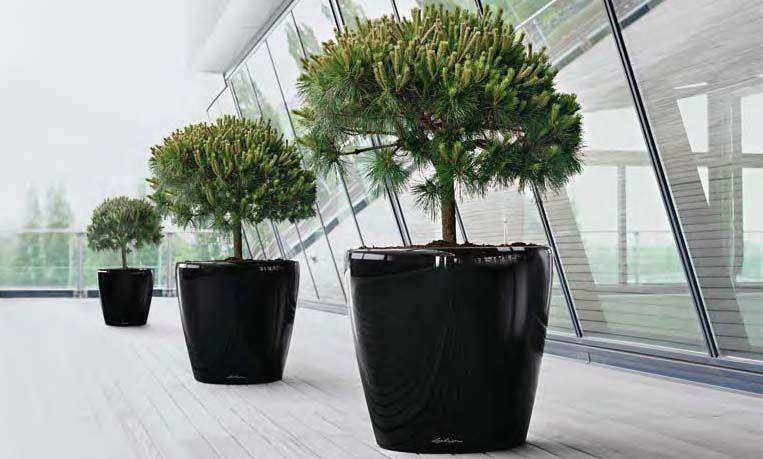 Grote Plantenbak Binnen.Bloempot Binnen Groot Gallery Of Cm Big Size Europese Balkon Binnen