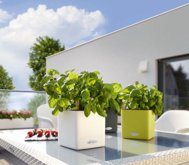Lechuza Color Cube Herb - Comprend Lechuza Irrigation