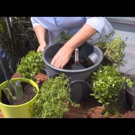 Lechuza Cascadino couleur Flowerpot - Comprend Lechuza Irrigation