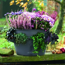 Lechuza Cascada couleur Flowerpot