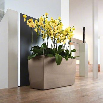 Lechuza Cararo Flowerpot - Stylish and robust, available in many sizes and colors