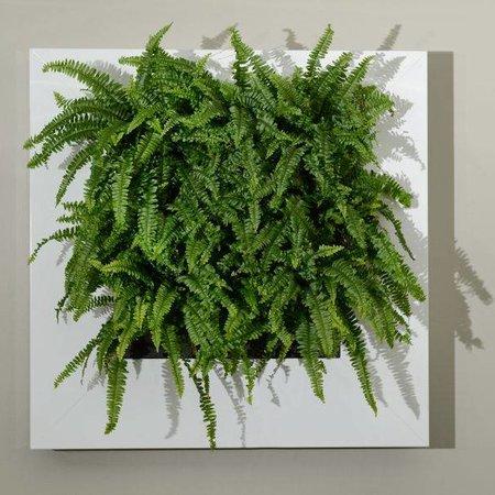 Live picture I Levend schilderij met echte planten!
