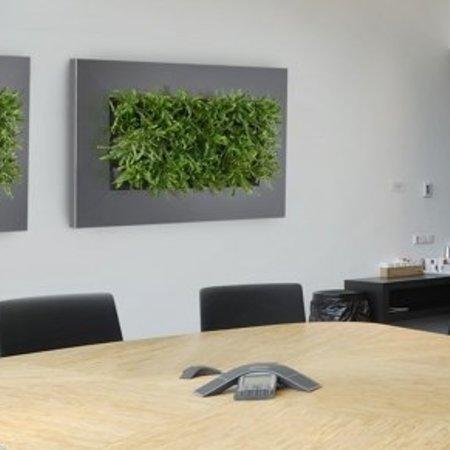 Live picture II Levend schilderij met echte planten!