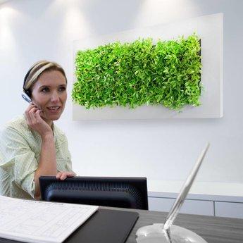 LivePicture Live picture III Levend schilderij met echte planten!