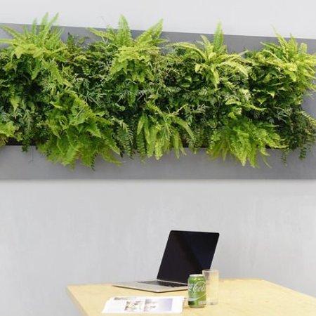 Live picture IV Levend schilderij met echte planten!