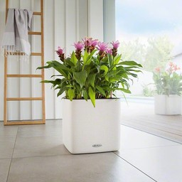 Lechuza Cube LS 35 color flowerpot