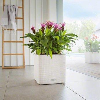 Lechuza Cube LS 35 color flowerpot. Including Lechuza Irrigation