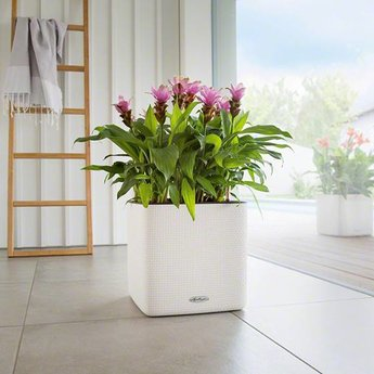 Lechuza Cube LS 35 flowerpot couleur. Y compris Lechuza Irrigation
