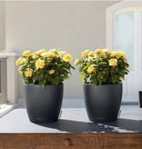 Lechuza Classico couleur Flowerpot - Timeless avec un look classique