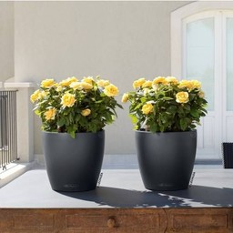 Lechuza Classico Color Flowerpot